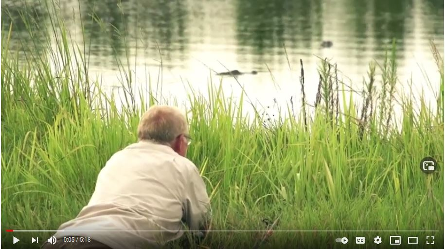 A hunter with GatorRaiderz Guide Service lays on the bank watching alligators swim by.